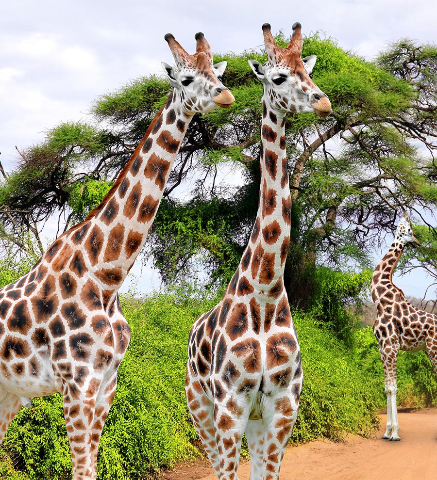 Programa en Tierra Safari de Lujo