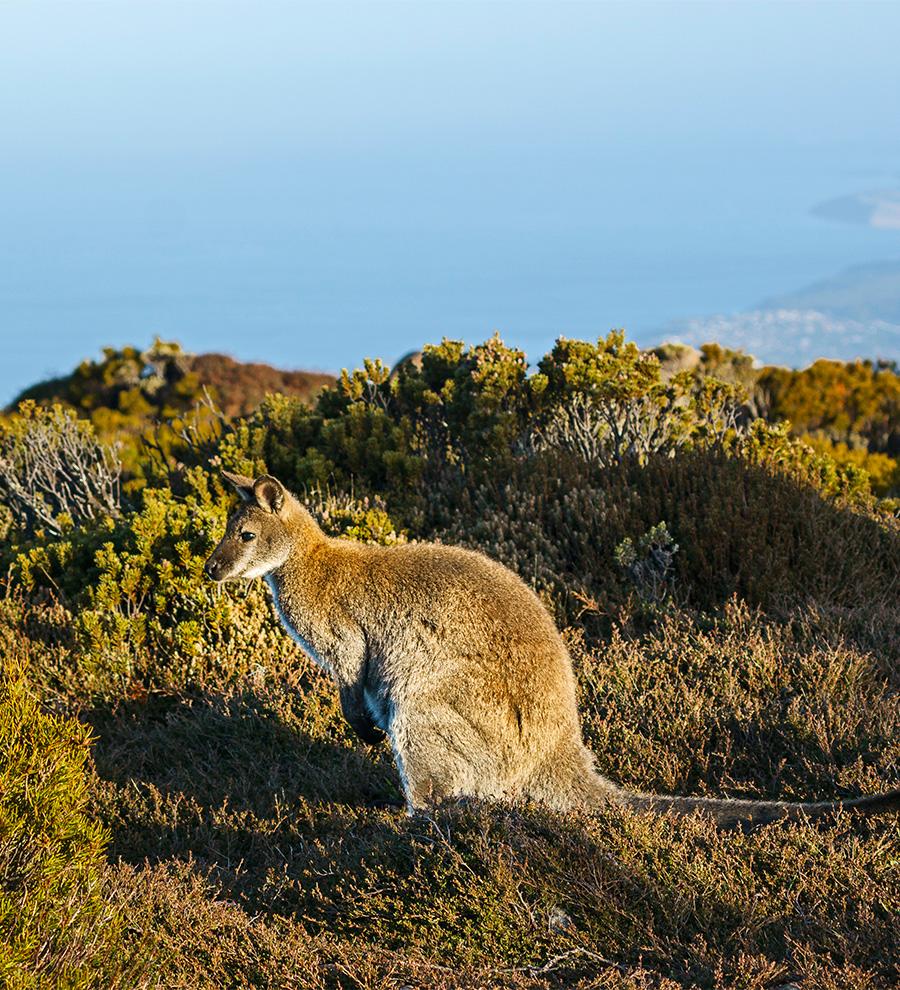 Puerto Wellington, Nueva Zelanda