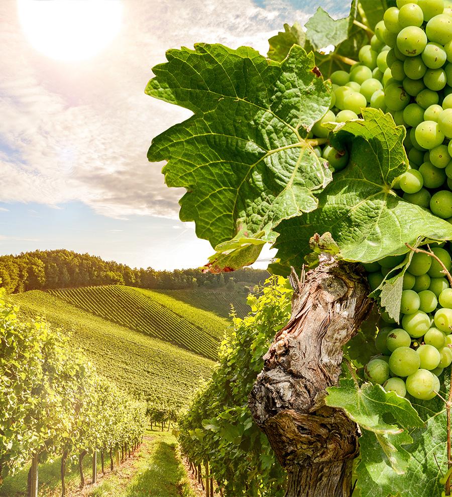 Programa en Tierra: Creaciones Culinarias, Cultura Chilena y Vino