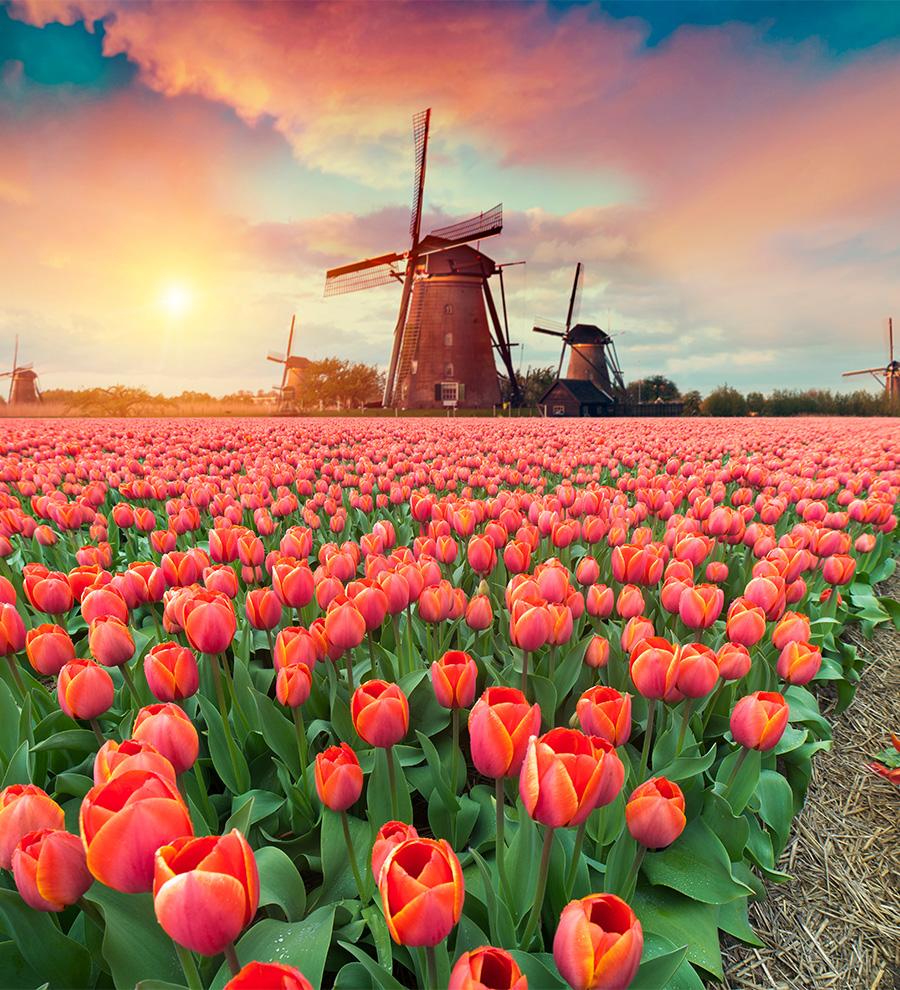 Programa en Tierra: Amsterdam Histórico