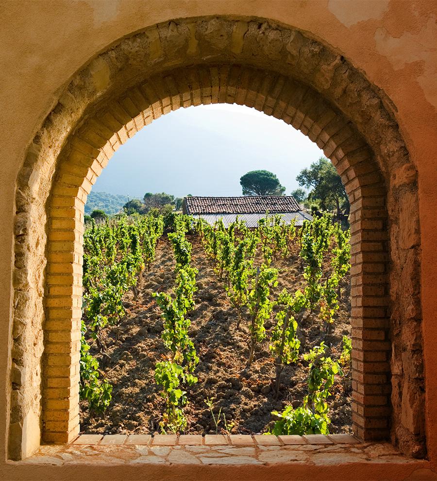 Excursión Vinos Sicilianos