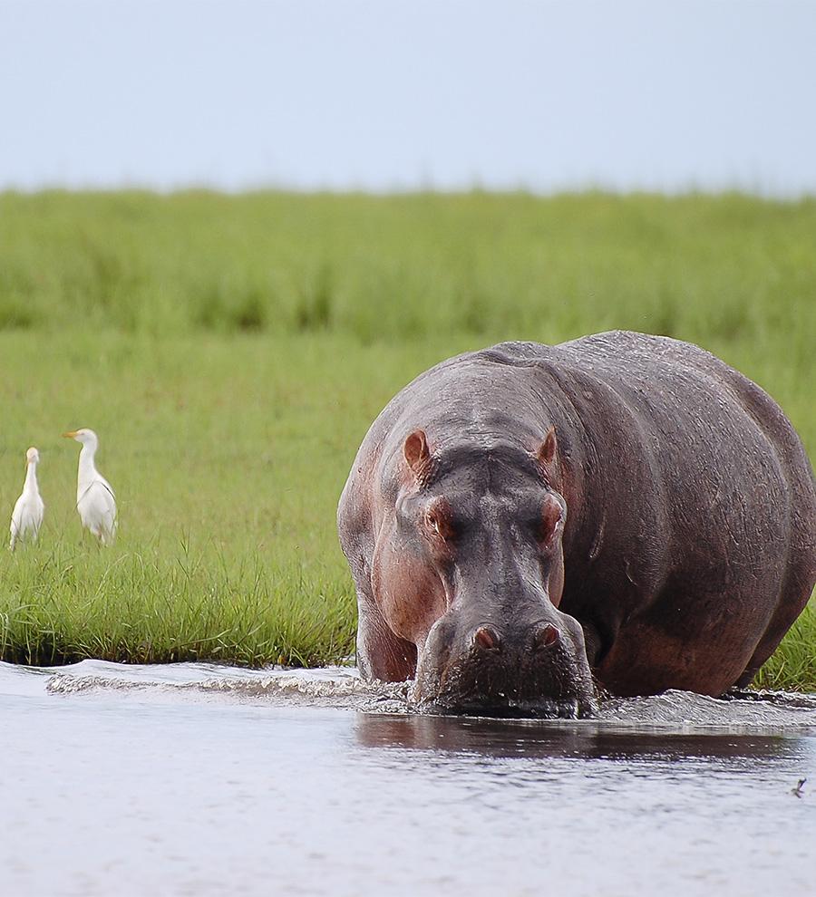 Programa en Tierra: Chobe y las Cataratas Victoria