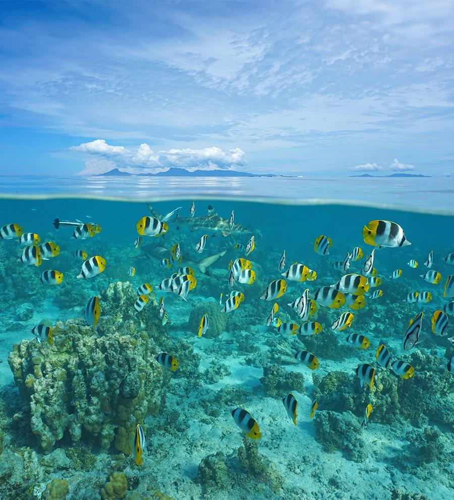 Puerto Raiatea, Polinesia Francesa