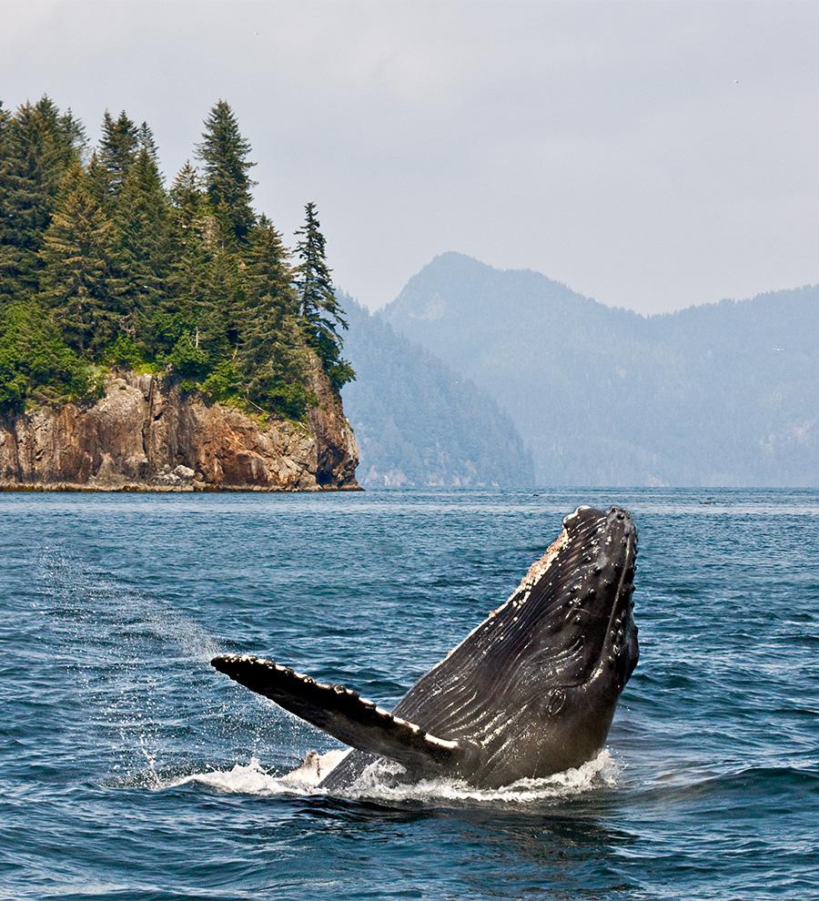 Excursión Avistamiento de Ballenas Y Búsqueda de Vida Silvestre