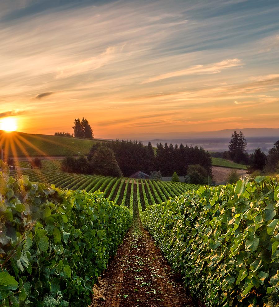 Excursión Vino Del Valle de Willamette