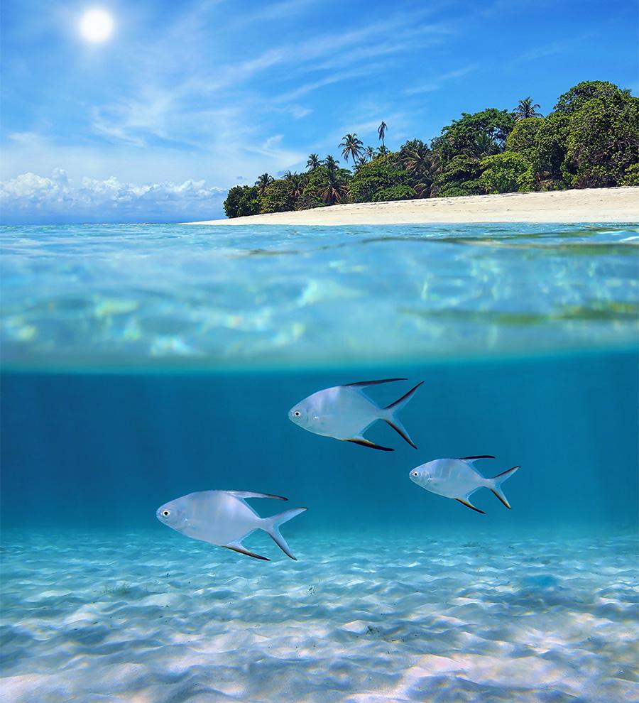 Excursión Isla Barbados, Foto Tour