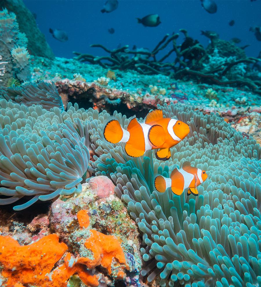 Excursión Aventura en la Gran Barrera de Arrecife