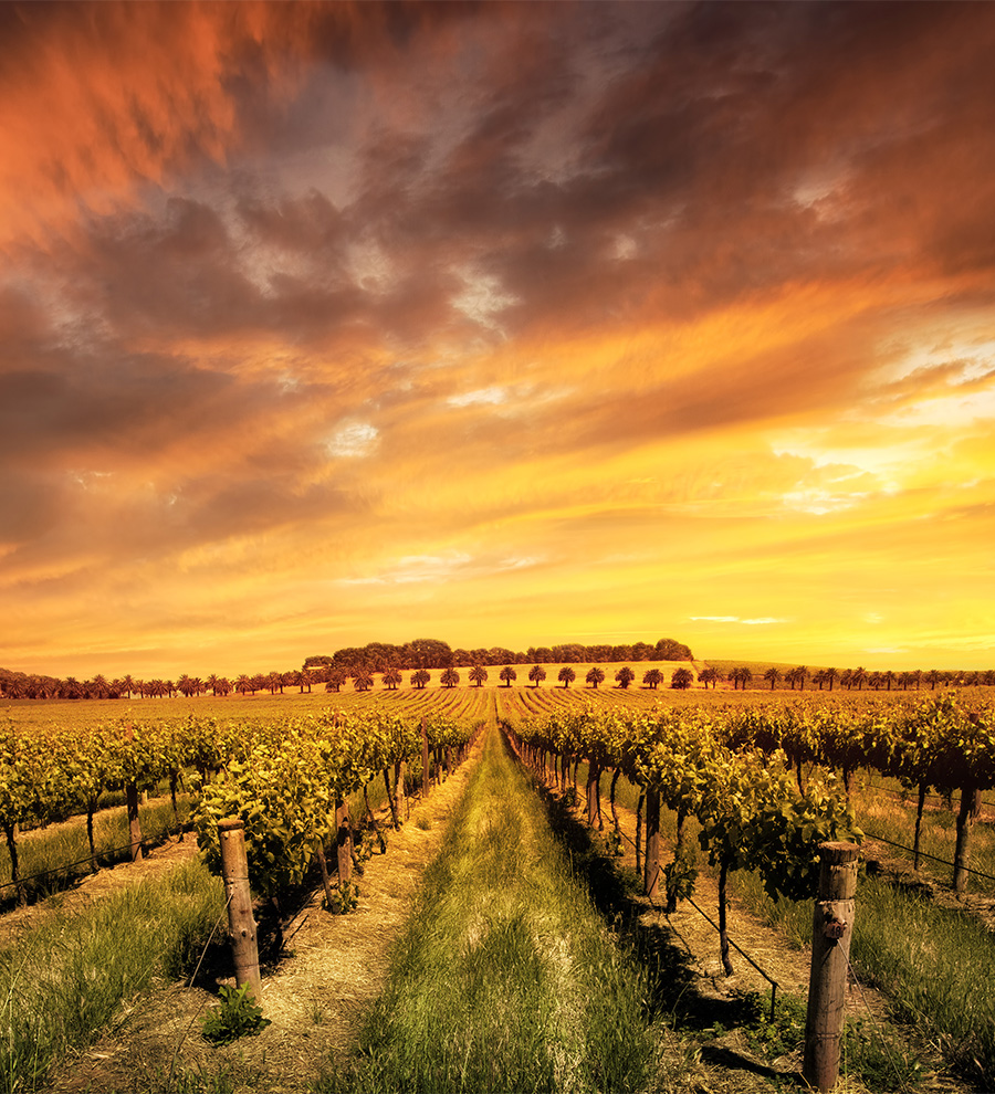 Excursión Adelaide Hills, Experiencia de Vinos
